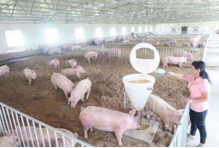 疫情期间增种蔬菜、增养生猪可获补助