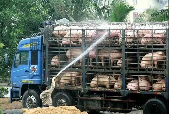 全民抗疫,多地从畜禽运输下手!