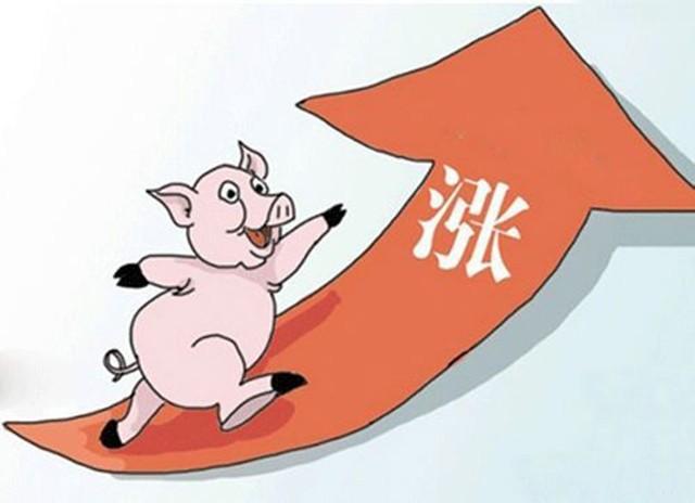 新冠病毒疫情对猪价有怎样的影响?这两个利好值得养猪人高兴
