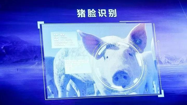 """农业数字经济快速发展,智能化养猪迎来""""大机遇""""!"""