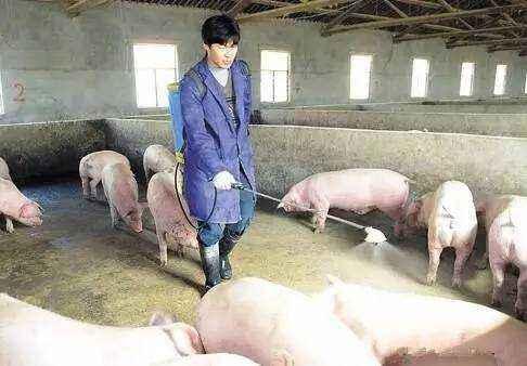 猪场做好生物安全工作