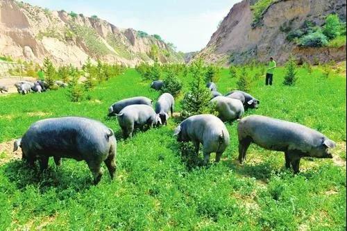 2020年,关于养殖必须注意的几点建议!