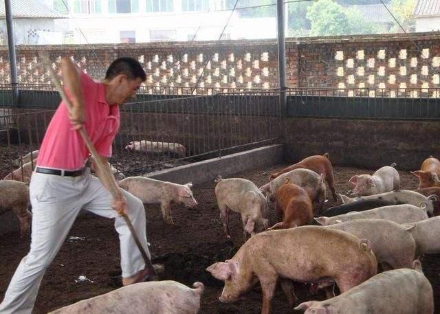 双疫情背景下家庭农场复产的机遇与挑战在哪里?