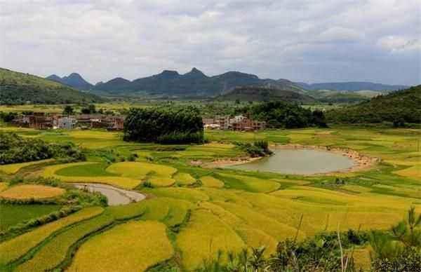 农业农村发展