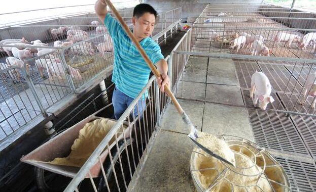 哪些因素影响饲料的消化率?用自配料的养猪人应该这样做饲料