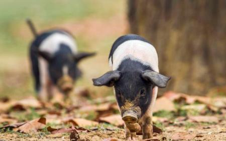 重磅!中国畜牧业协会李希荣会长谈疫情下畜牧企业如何渡过难关