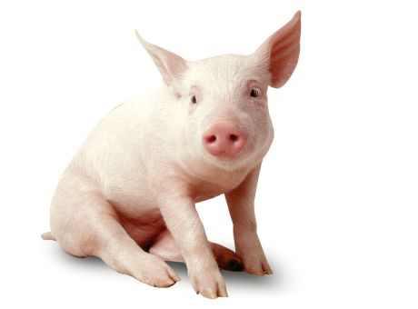 2月19日全国生猪价格内三元报价表,今日全国内三元价格仍然是高位震荡为主!