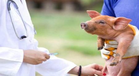 研究:新发现2种可在动物饲料中传播的病毒
