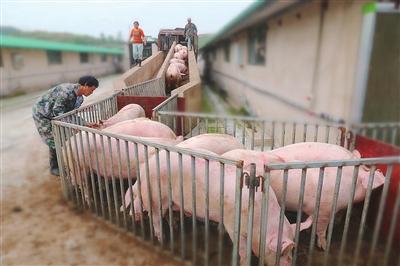 2月20日全国生猪价格外三元报价表,生猪均价较之昨日继续保持下跌,跌势有所放缓