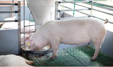 山东省人民政府办公厅关于推动畜牧业规模养殖创新经营方式的若干意见