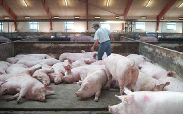 疫情之后,养殖户要小心春季猪场传染病,做好应对措施