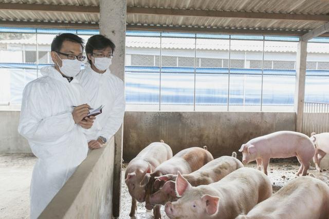 养猪技术,挣钱靠技巧,猪棒状杆菌病的防控方法