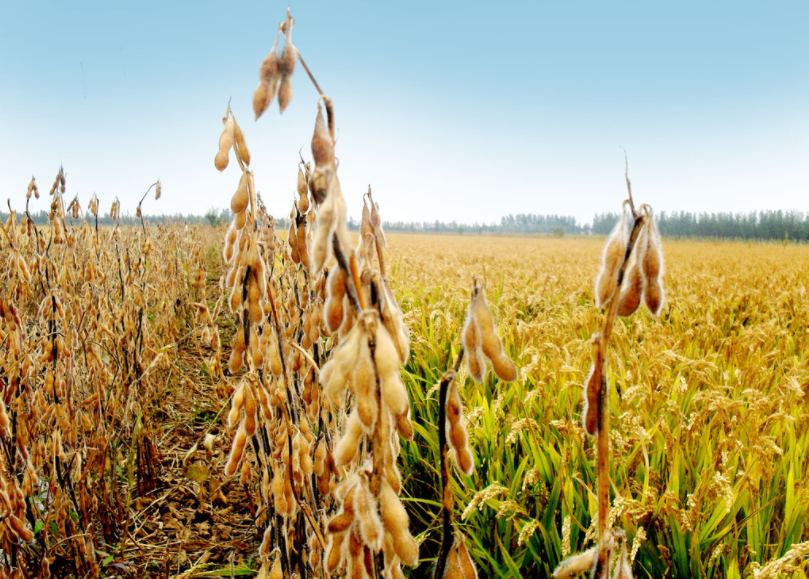 2月23日全国豆粕价格行情表,今日宁夏豆粕涨至3480元每吨!