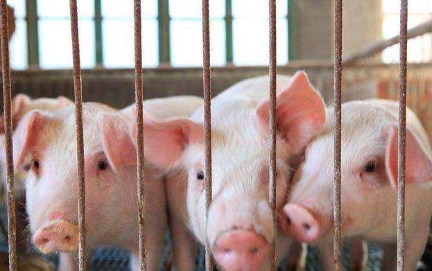 """去年""""非瘟""""、今年""""新冠"""",四川生猪生产恢复情况如何?"""
