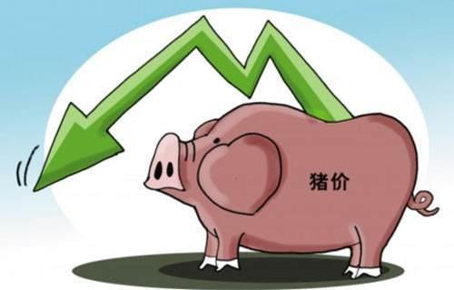 2月23日生猪价格,本周持续下跌,但仔猪价格暴涨,高价区达2200元/头
