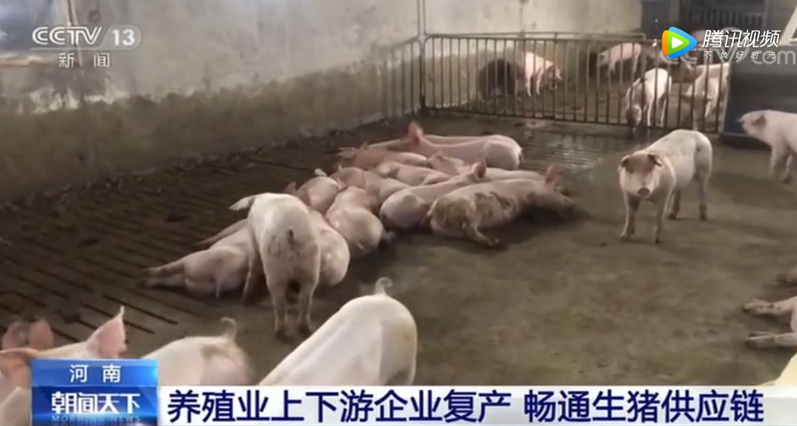 河南:养殖业上下游企业复产 畅通生猪供应链