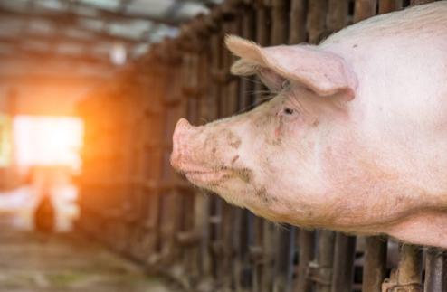 2月24日生猪价格走势,四川暴跌1.1元/公斤,陕西江苏重庆等地大幅下跌