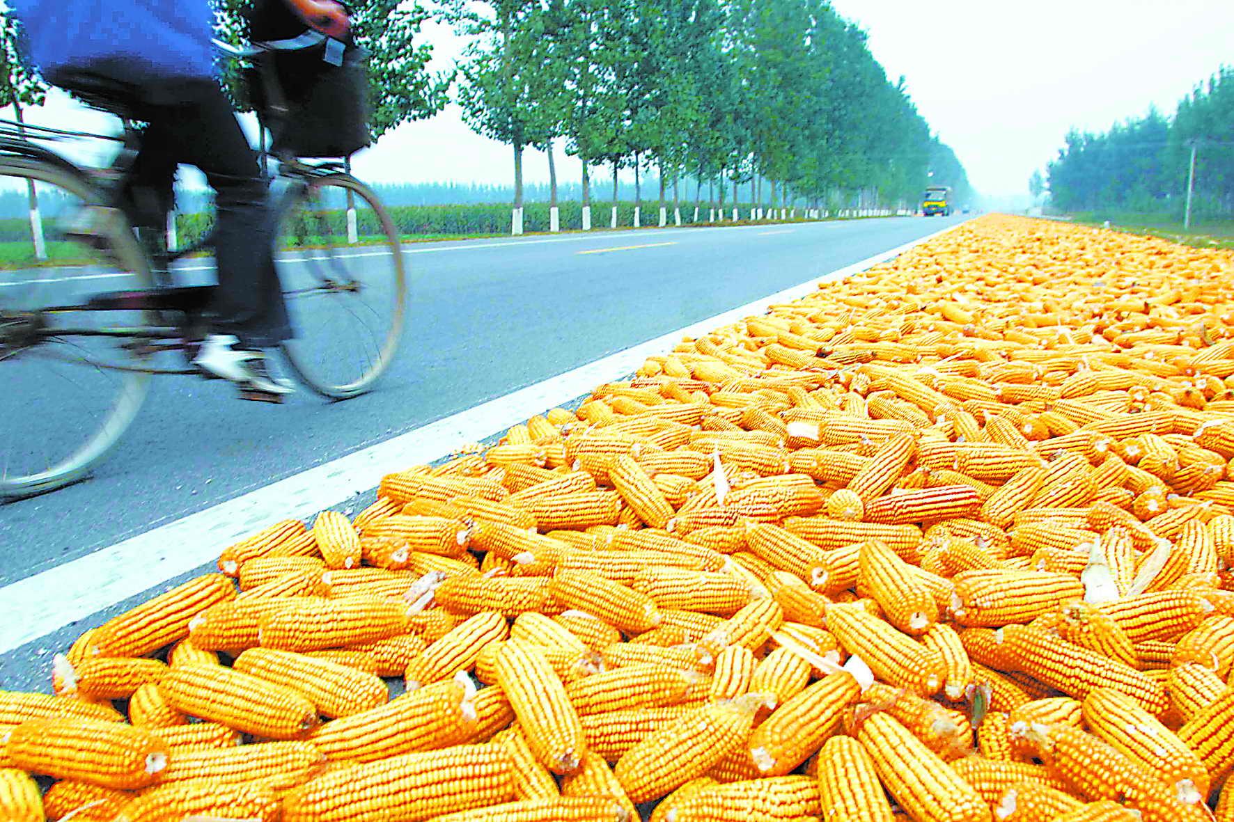 2月24日全国玉米价格行情表,全国玉米价格开始高位回落!