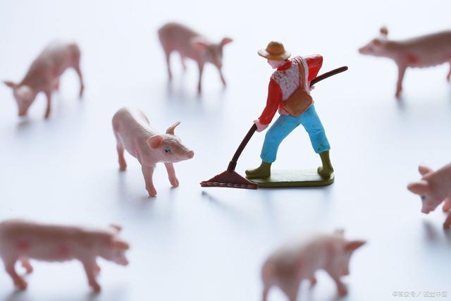 2月25日生猪价格东北小幅上涨,全国均价持续下跌,跌破37元/公斤