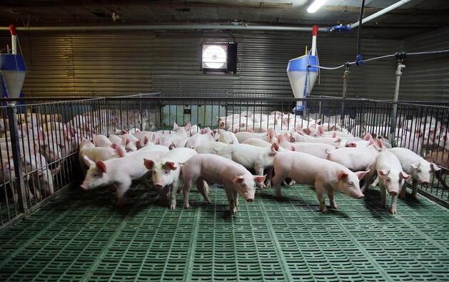 浅谈规模养猪场挑选智能化设备应注意的几点注意事项