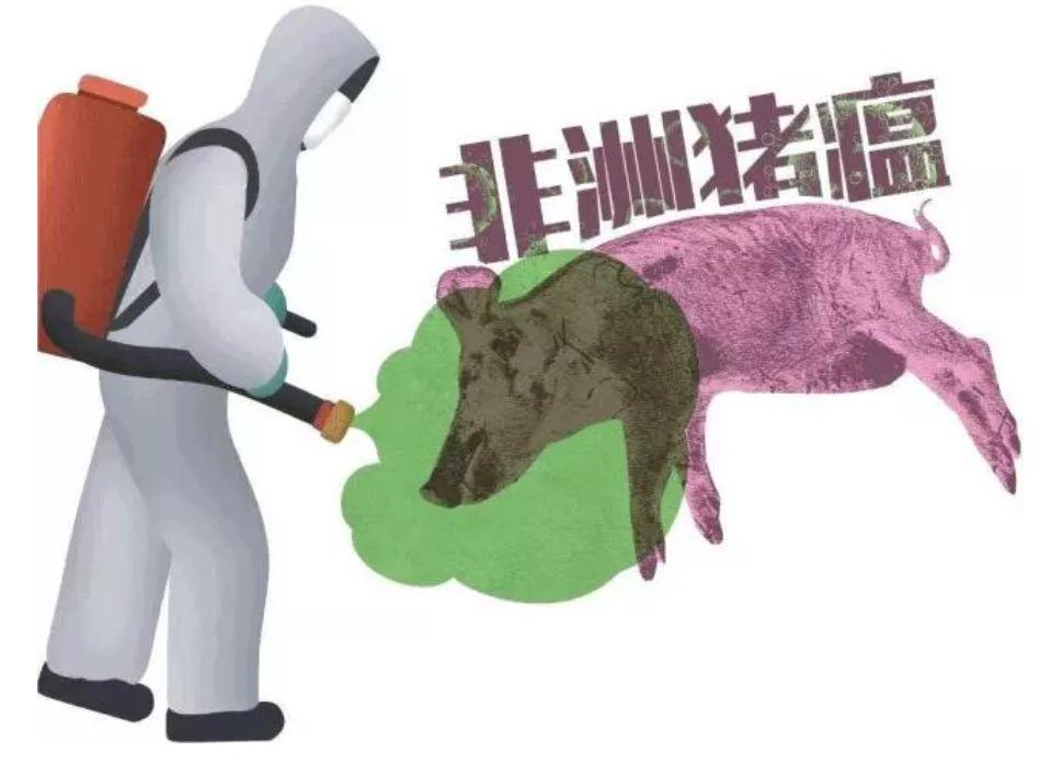 急!各地又开始爆发非瘟!最新非洲猪瘟的临床症状及传播途径!