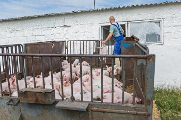 郭异忠总裁观点:新冠疫情对农牧行业的影响