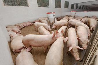 如何塑造一个安全无死角的猪场?