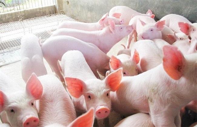 2月25日全国生猪价格内三元报价表,今日全国内三元生猪均价仍保持下行趋势!