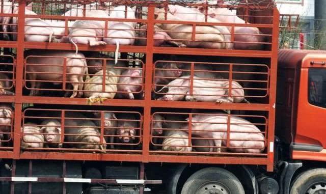 2月25日全国生猪价格外三元报价表,今日全国外三元均价较之昨日继续下跌!