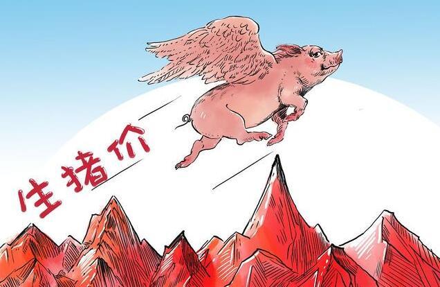 2月26日生猪价格走势,东北、华北全面回涨,贵州大幅上涨0.82元/公斤