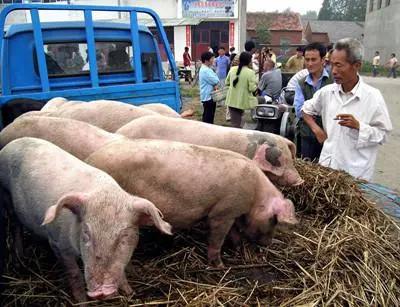 猪肉、蛋价直降,今年养殖赚钱么?对养殖户来说有三个好消息!