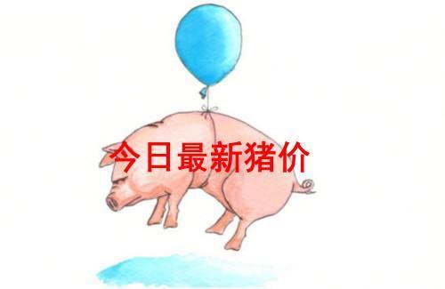 河南等地低价仍在补涨!猪价难道不跌反涨?