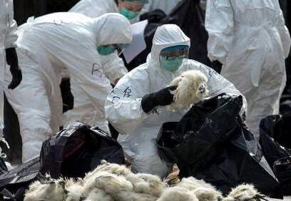 越南:2020年11省市发现禽流感疫情 超过10万只家禽被扑杀