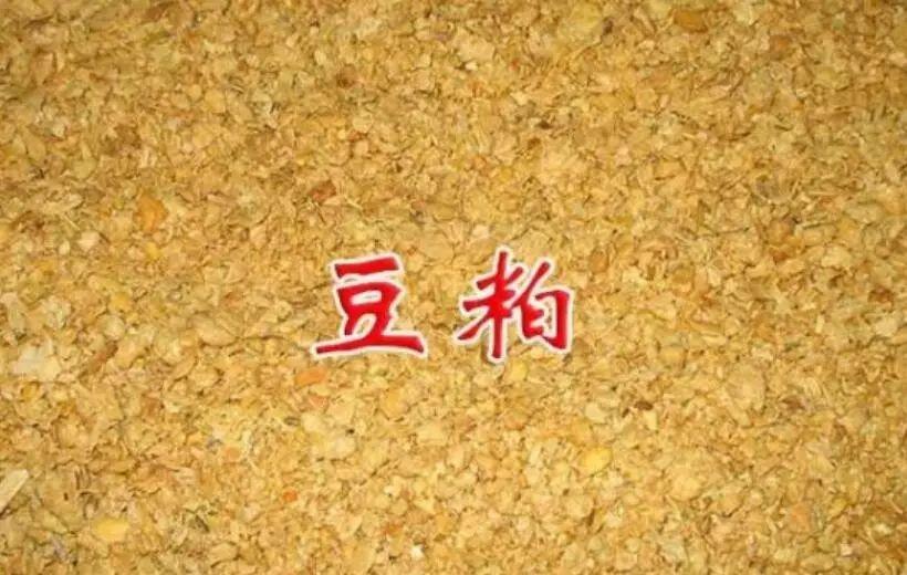 2月28日全国豆粕价格行情表,今日全国豆粕市场稳中偏强运行!