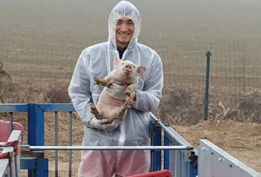 复工记|90后养猪场场长:防控非瘟为防控新冠提供重要经验