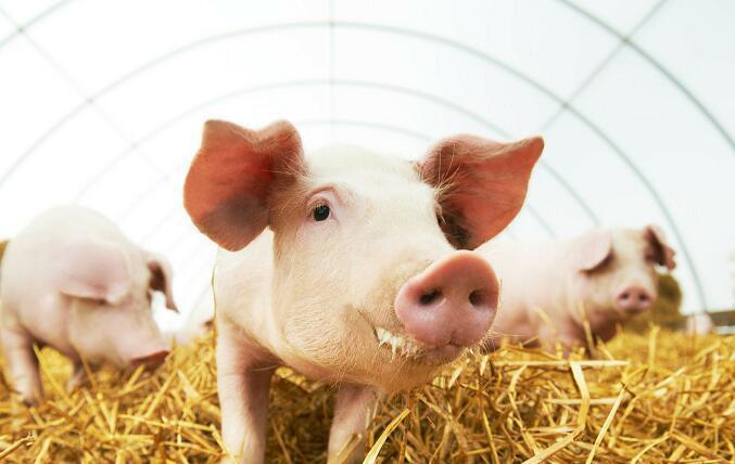2月29日全国各省市仔猪价格报价表,目前外三元仔猪涨的最高的达2000元每头!