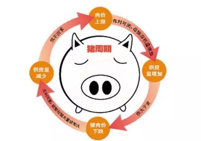 仔猪价格黄金期下,仍有多方利好!