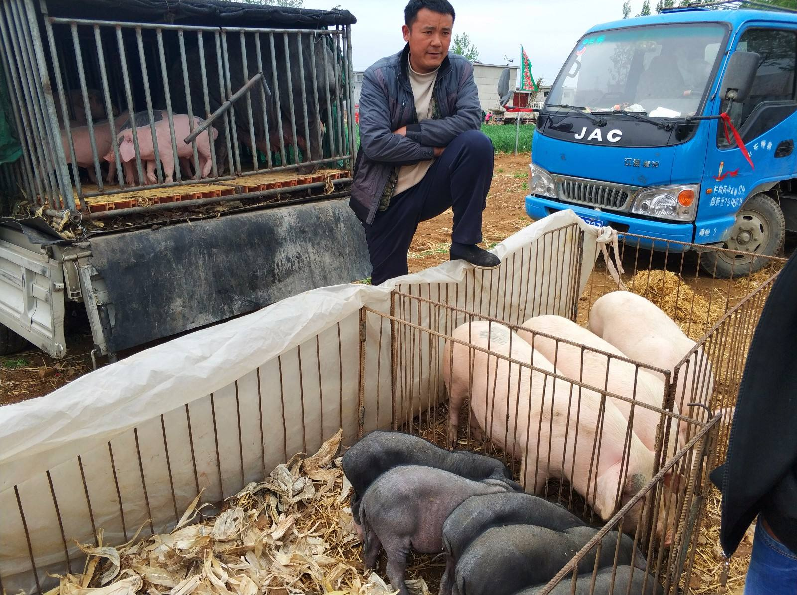 3月3日猪价走势:低价区屠企上调收猪价格,江西暴跌1.09元/公斤