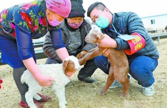 新疆:重点保供涉牧企业产能已恢复七成 肉蛋奶供应有保障