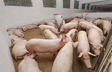 山东:生猪生产止跌回升,总体情况好于全国