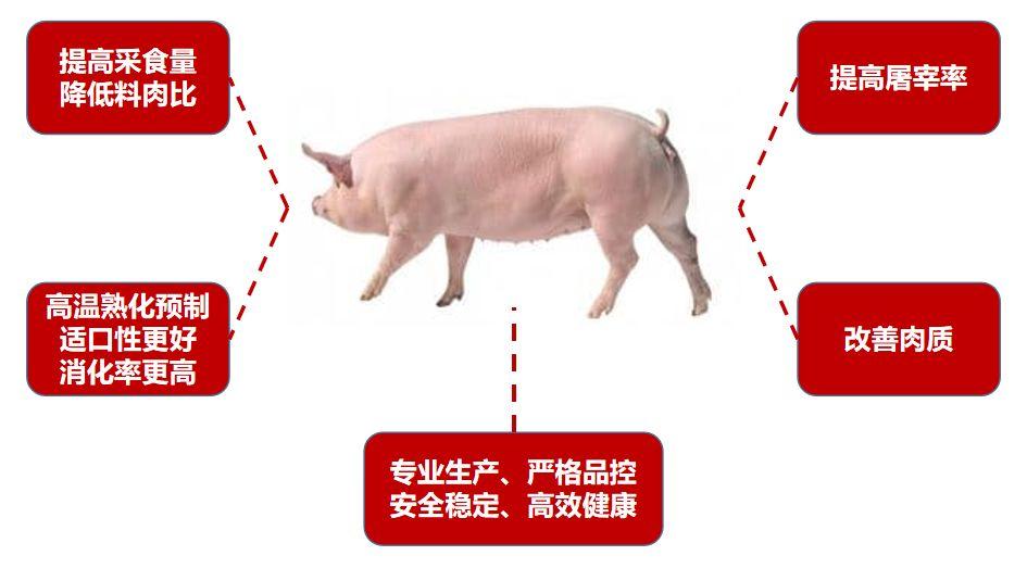 通威仔猪料:养金猪,高收益,降风险