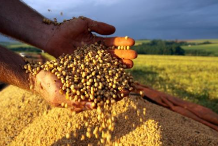 新冠已明显控制,豆粕表现不淡定是为哪般?