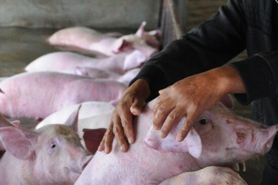 特写:养殖业问题热线电话,直通农民的心!