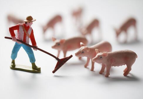 商务部:猪肉批发价下降 今日投放2万吨中央储备肉