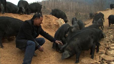 """农村兴起""""养猪热"""",这5个方面是重点,看完就心理有数了"""