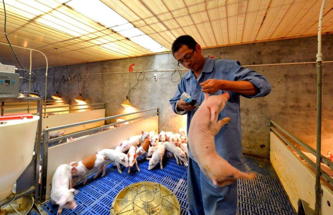 发生流行性腹泻后,猪场生物安全管理应当如何做?