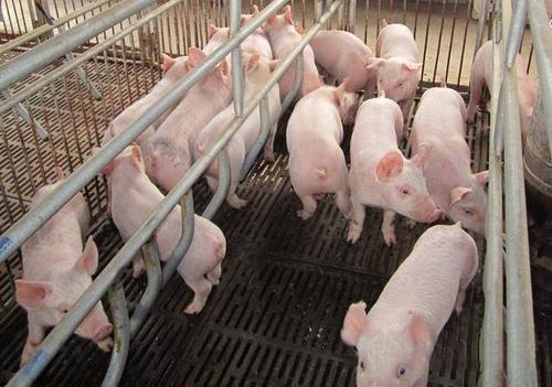 发生与未发生腹泻的猪场,如何做检测和监测?