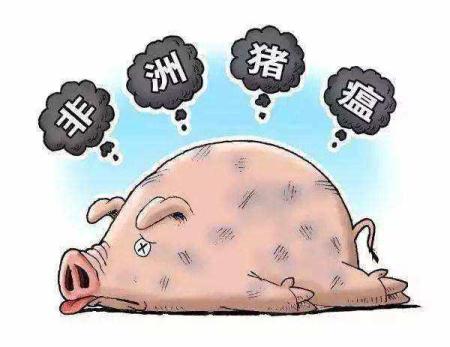 """所谓""""拔牙""""为什么能成功?非洲猪瘟精准清除的理论基础"""