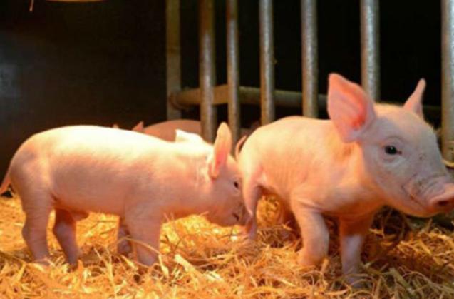 全国调减禁养区1.4万个,众多养猪人受益