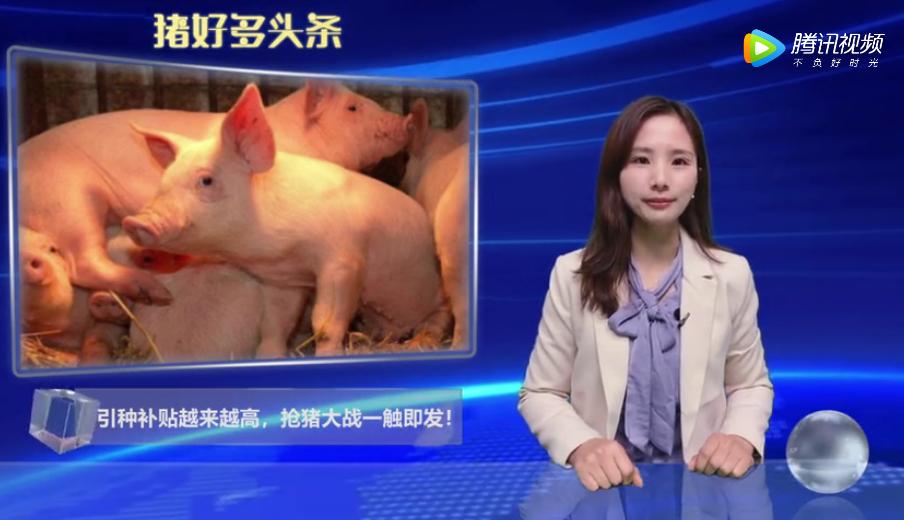 各省开启抢猪大战,引种补贴越来越高,最高补贴2000元/头!